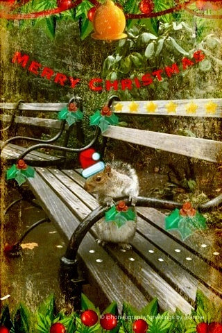Merry Christmas squirrel