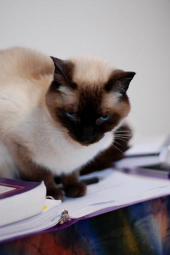 Professor Tashi, studying, Jan 2011