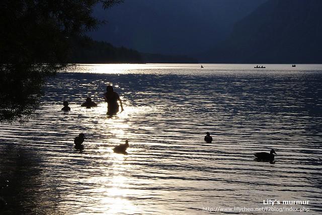 彼方有人類的家庭在湖裡游泳,而此方則有鴨子家庭在水上悠遊。