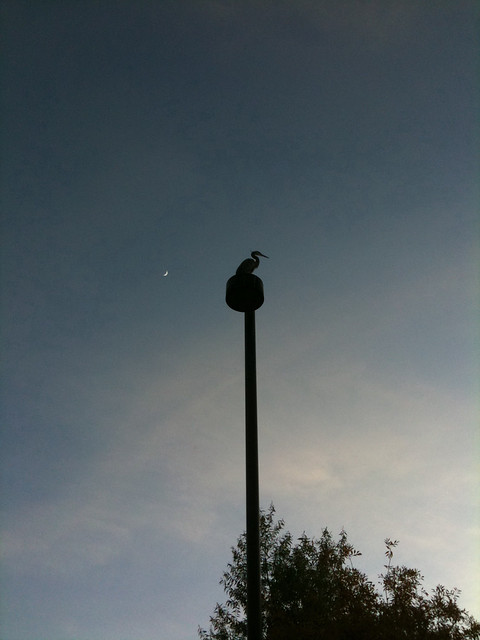 Bird and the moon