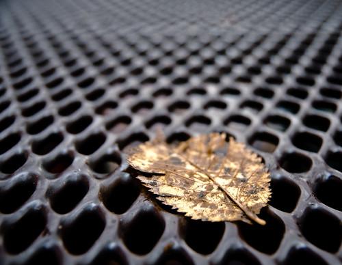 Leaf on the Mesh