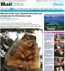 Who ate all the nuts?