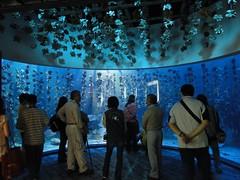 夜探台灣水域館:牡蠣
