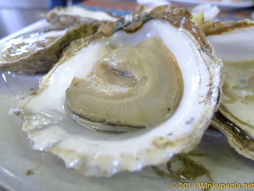 Native No.1 Oyster at Company Shed