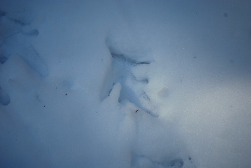 turkey tracks?