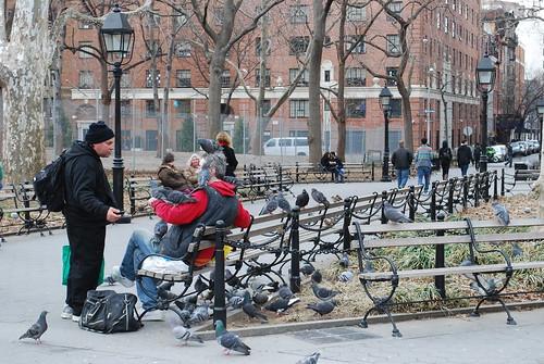 Pigeon Man at NYU