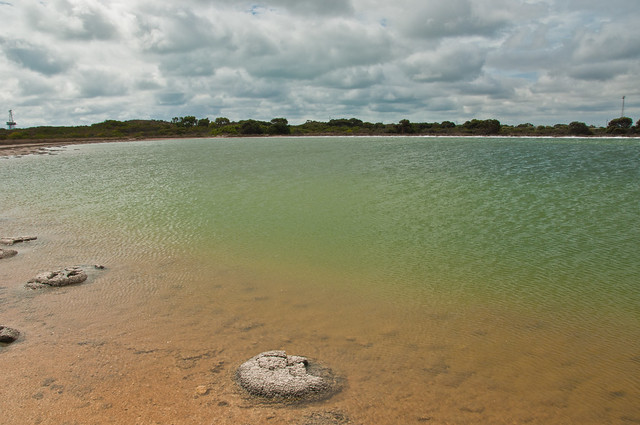 Stromatolite (or thrombolite) at Lake Thetis, Cervantes, Western Australia