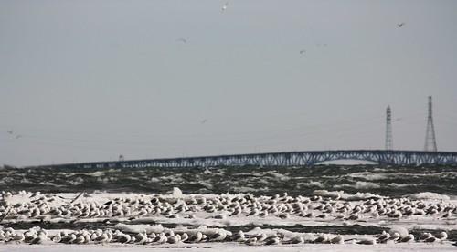 Birds on an Iceberg
