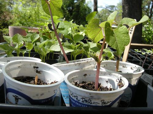 pretty seedlings