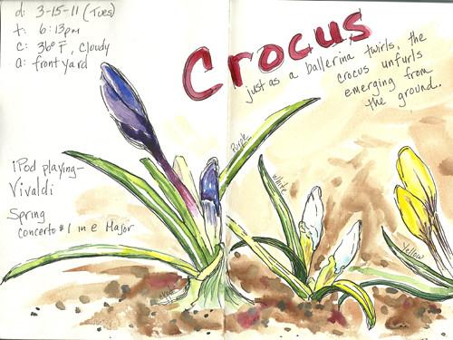 20110315_crocus