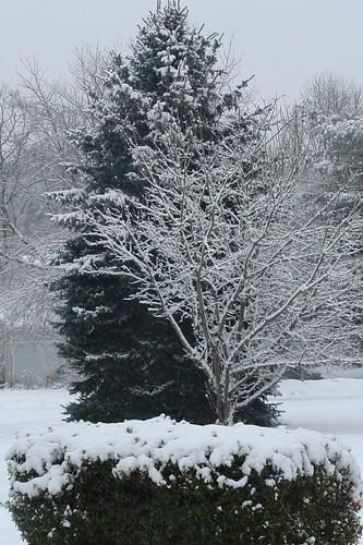 Week 4: Winter