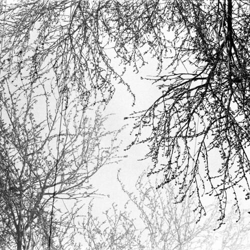tree multi