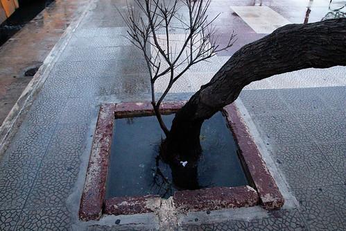tree-water-sliema