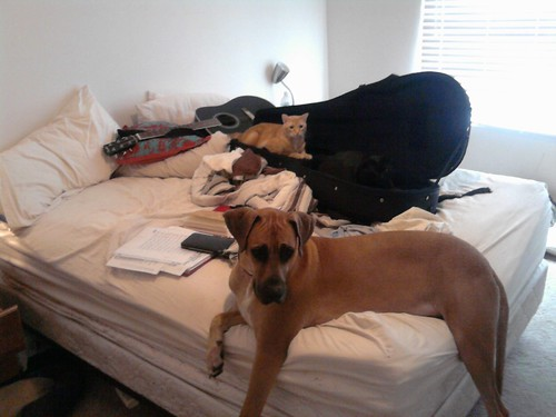 animals on the bed