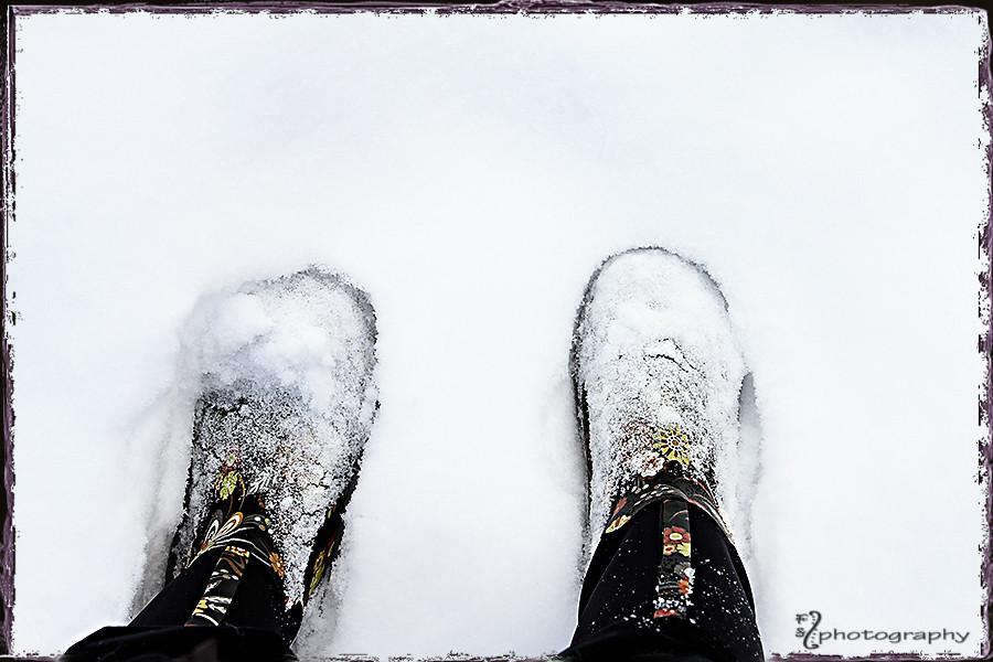 Snowy Bogs