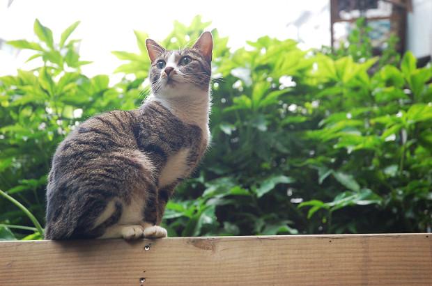 Cat。貓薄荷。定性01.jpg