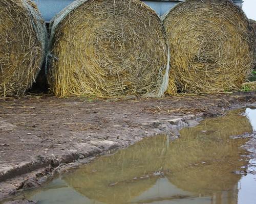 20110220-21_Round Hay Bales - Hunningham Farm by gary.hadden
