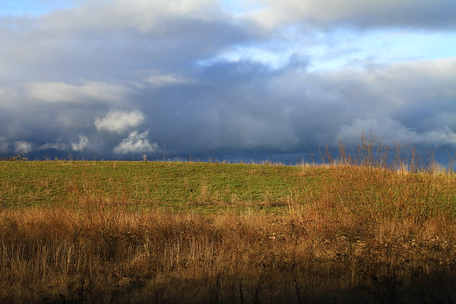 savannah prairie in Finley National Wildlife Refuge