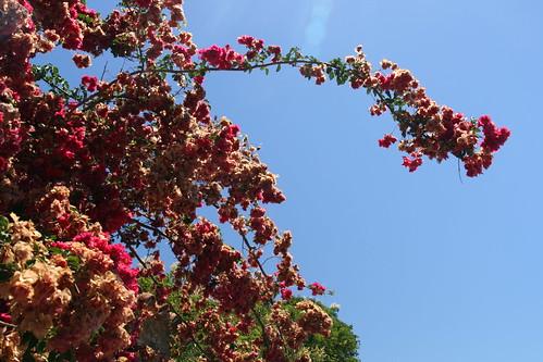 Blüten.