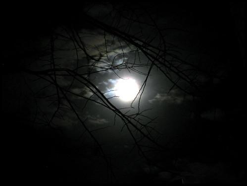 Luna by [Piccola_iena]