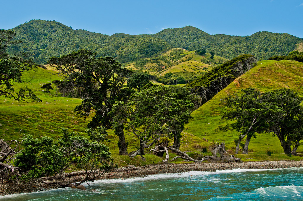 View in the Coromandel Peninsula