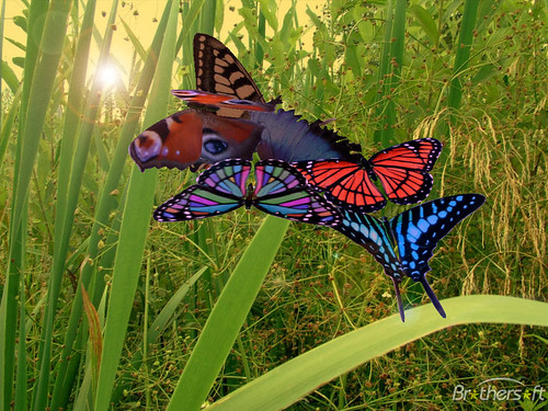 amazing_butterflies_3d_screensaver-86737-1231312437 by maskuniskandar