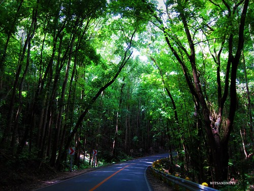 Bohol's manmade forest