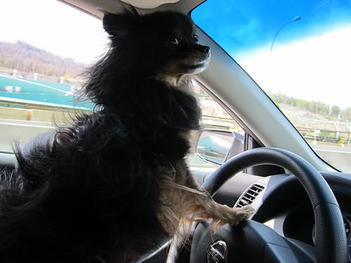 Driving Up to Kelowna