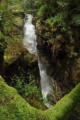 Cypress Falls, 30 Apr 2011
