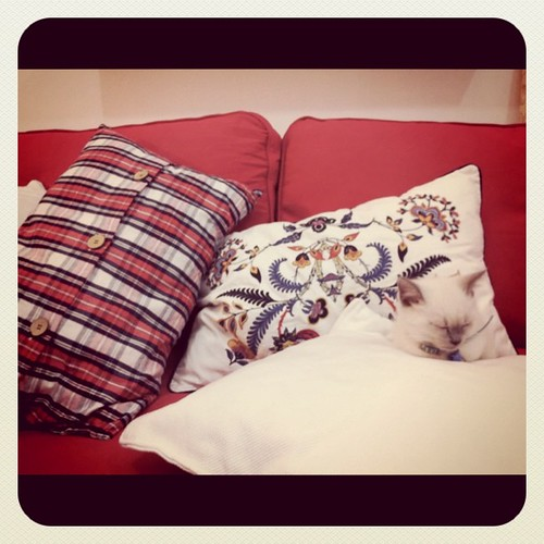 he took control of the sofa's pillows!