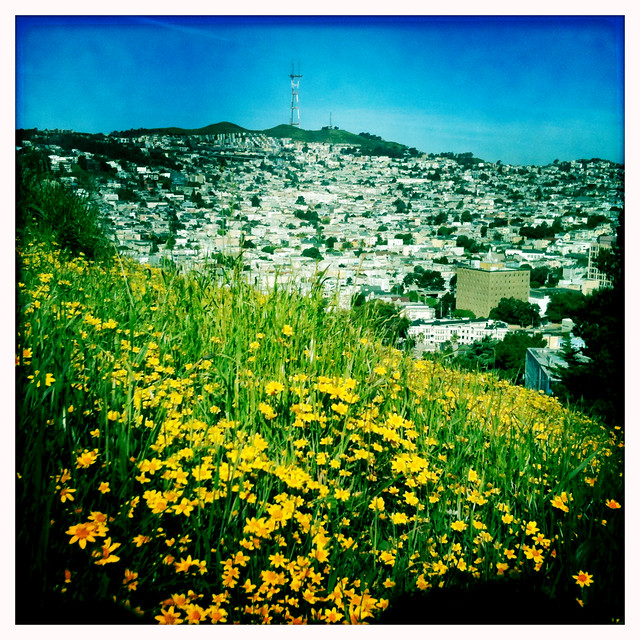 Twin Peaks from Bernal Hill with an abundance of yellow flowers that are not Ranunculus californicus.