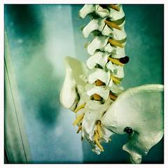Spine 103/365