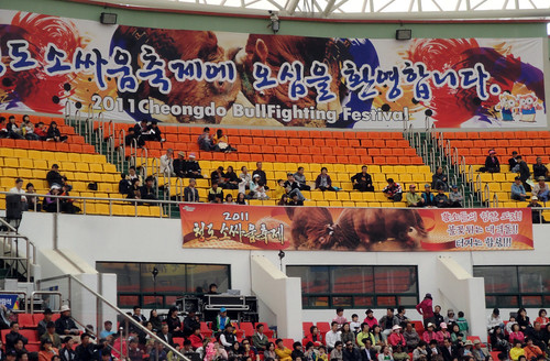 2011 Cheongdo Bull Fighting Festival