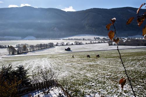 neve sciolta su pascolo e mucche_7004116 come oggetto avanzato-1
