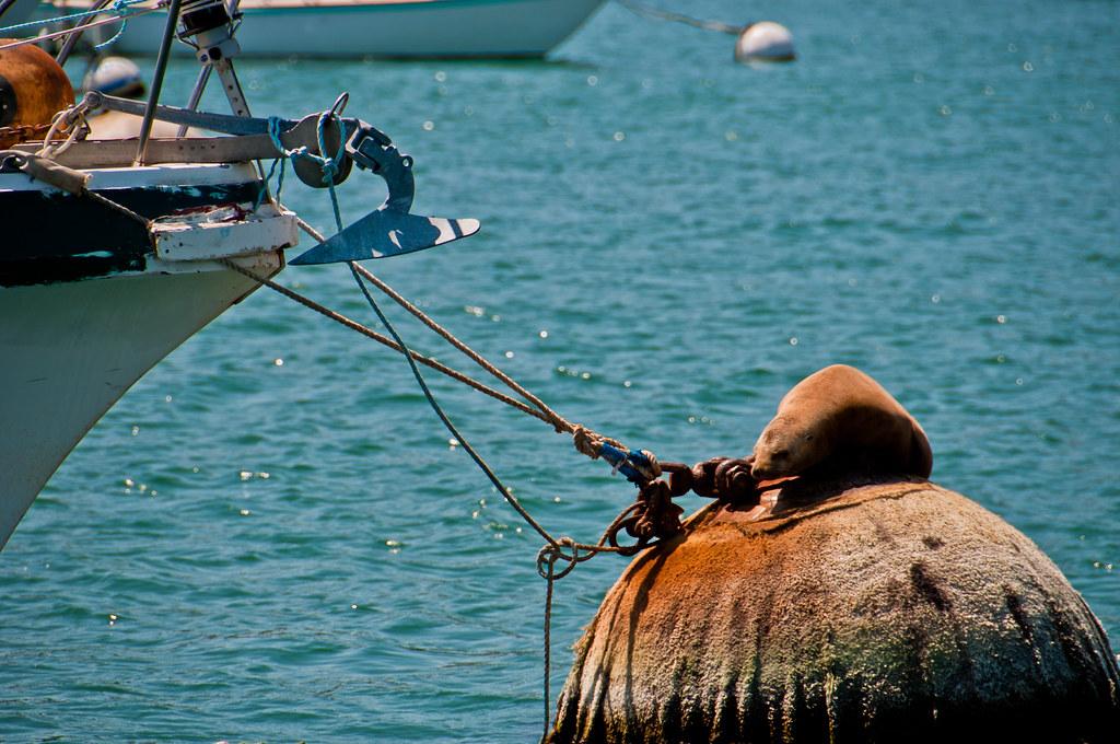 Sea lion on bouy