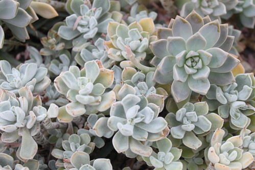 New York Botanical Gardens - Succulents 2