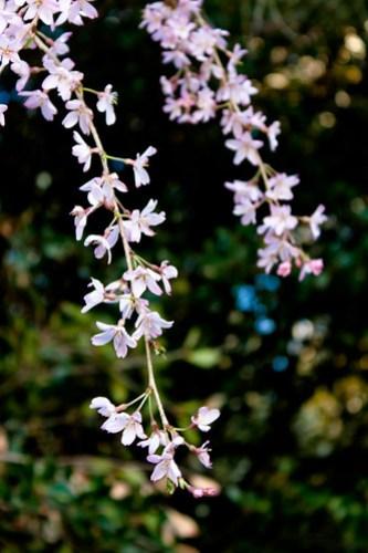 Evening Flower Walk