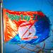 Tagaytay Zipline Flag