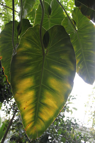 New York Botanical Gardens - Heart in Nature - Leaf in Tropical Conversancy