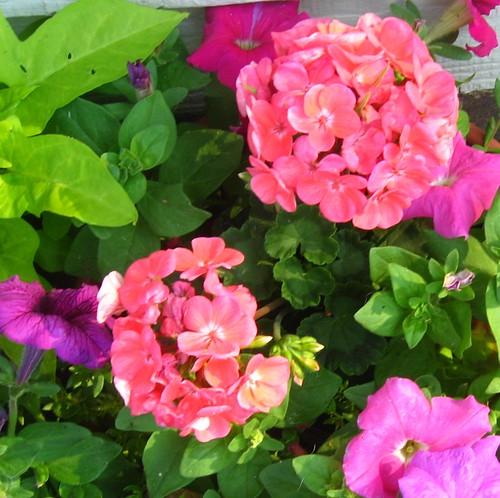 2011_06_06 - flowers 002