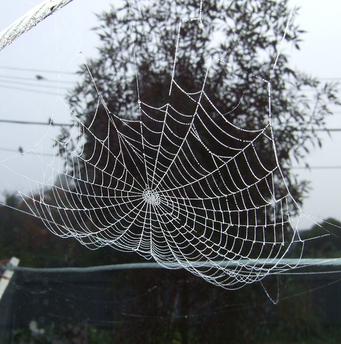 spider's web in the morning, on the clothesline