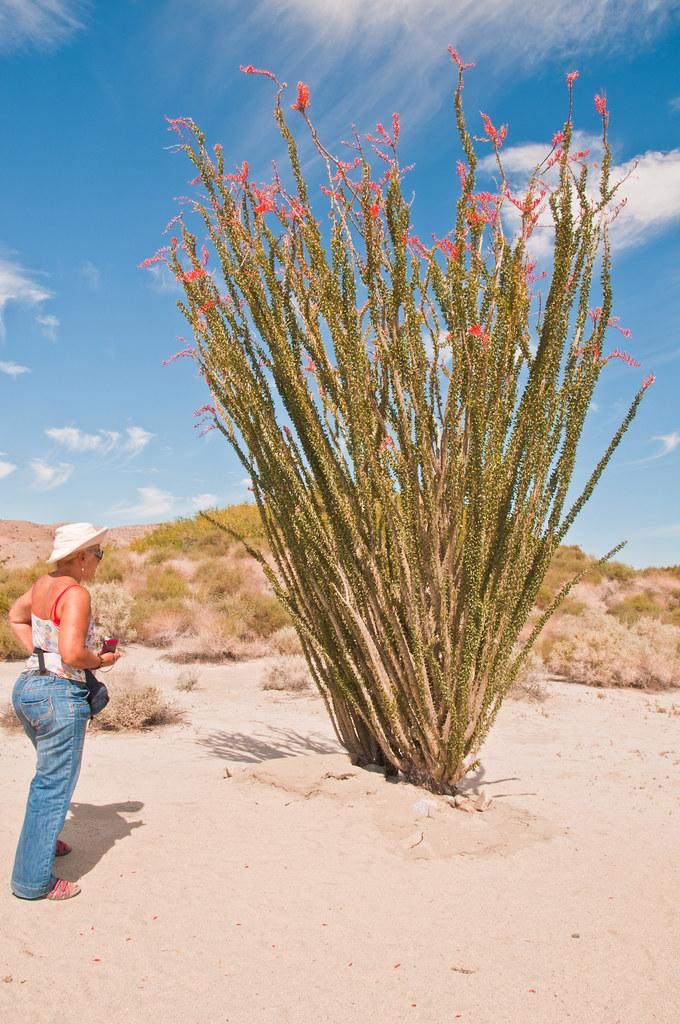 Chris in the blooming desert