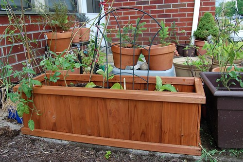 "A ""raised bed"" of eggplant and tomatoes."