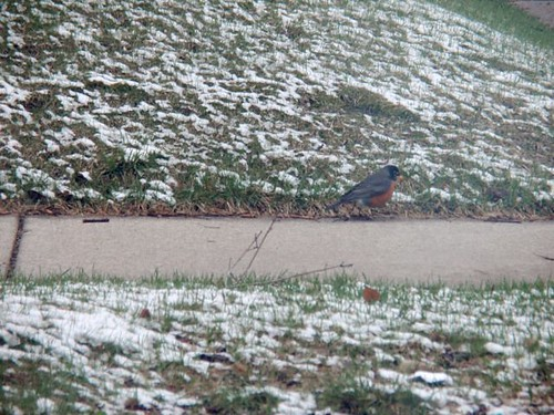 unhappy robin
