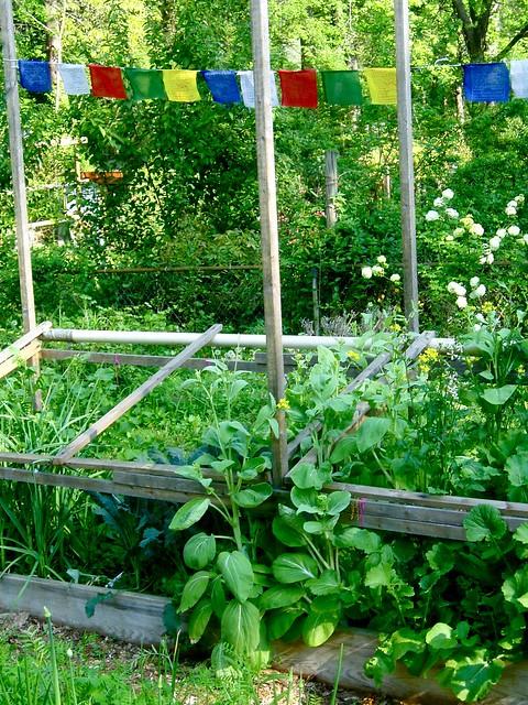 springtime bounty open lotus garden