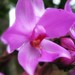 terestrial orchid