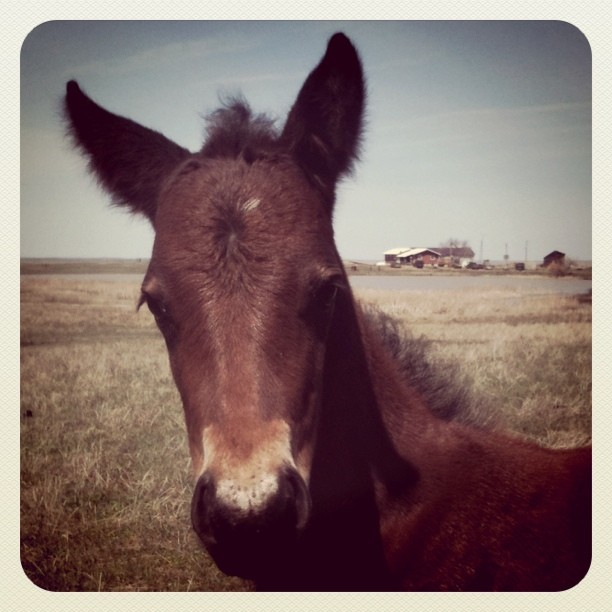 Cute bay horse colt