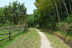泉の森(ふれあいの森)―東ヶ里緑地(Azumagasato green, Izuminomori park, Yamato, Kanagawa, Japan)