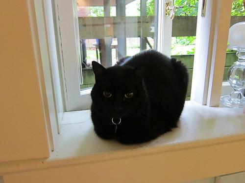 Fresh Baked Catloaf