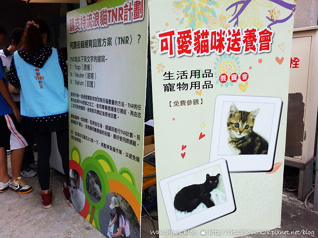 20140614華山貓咪送養_110027